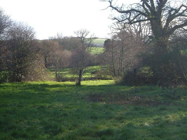 Scene by Fingle Brook