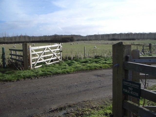 Sheep Pastures at Chase Park Farm south of Yardley