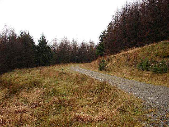 Forestry track to Esgair Fawr