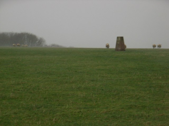 Triangulation pillar on Withington Hill