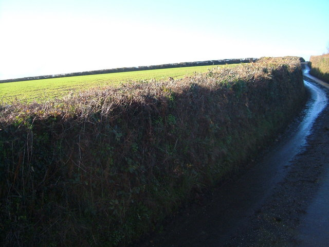 Lane above West Ford Farm