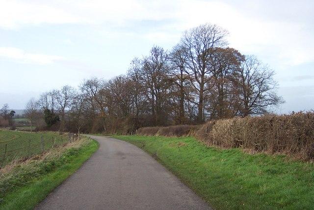 Copse by the Willington Lane