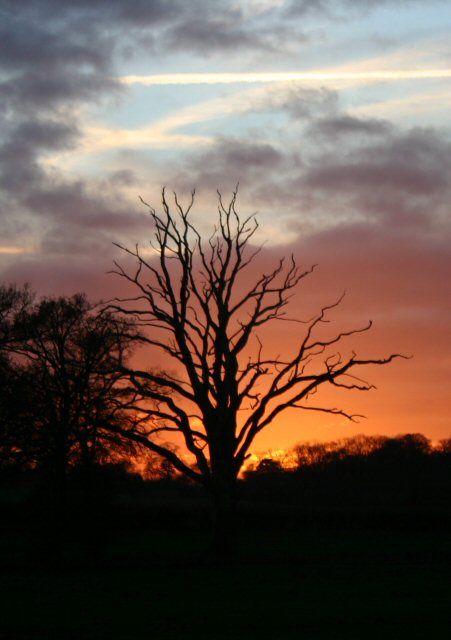 Flaming tree, Little Saxham