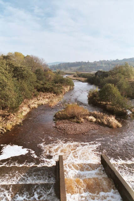 Salmon Run on River Breamish from Hedgeley Bridge