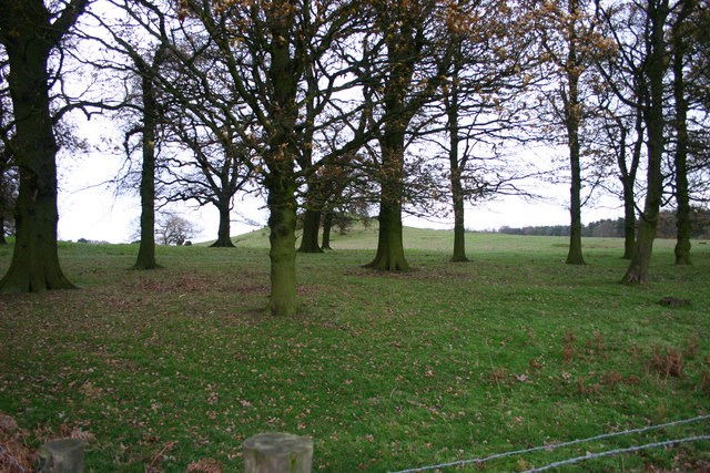 Tittensor Chase