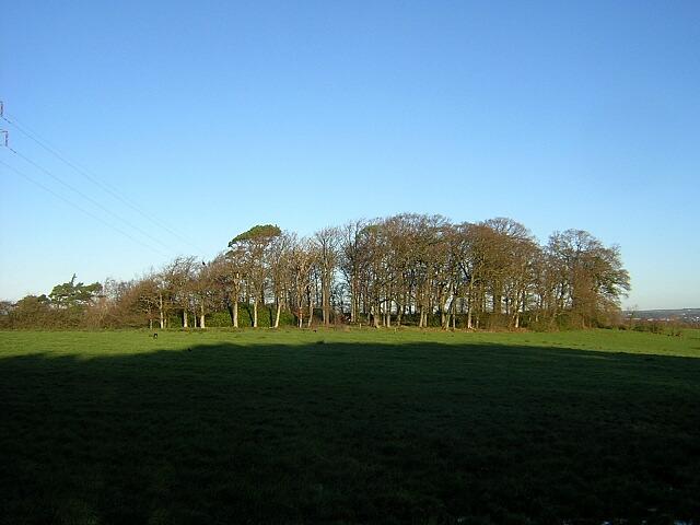 Small Wood Near Craigie Road