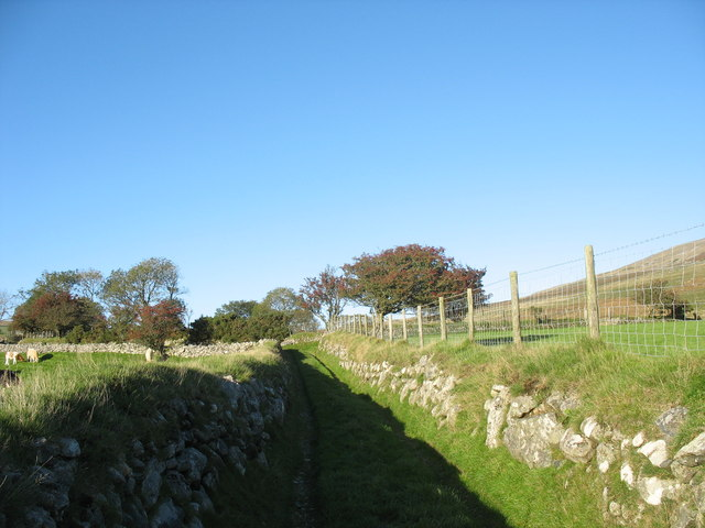 Green lane leading to Pant Glas Uchaf