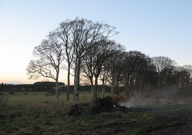 Moss Road Plantation