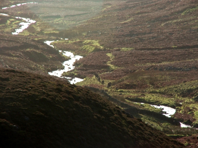Grouse Beaters making their way up Gate Up Gill.
