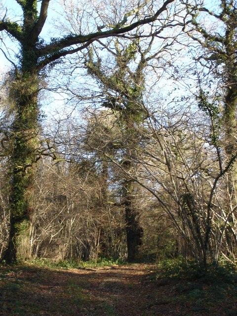 Fryern Court Wood