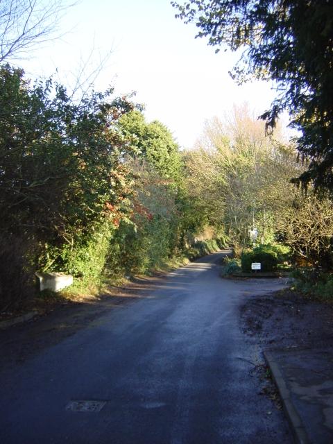 Peacock Lane
