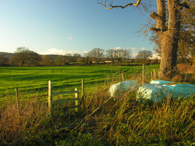 From stile and old tree looking towards East Farm, Crickheath