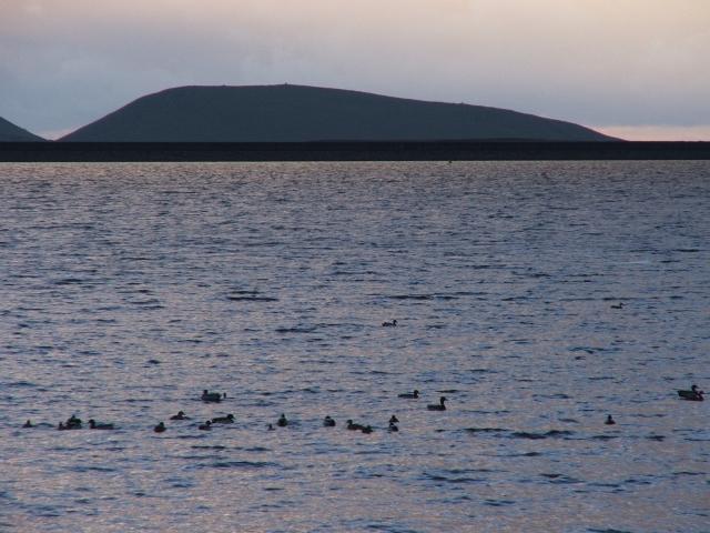 Ducks on Grimwith Reservoir.