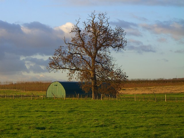 Field with orchard beyond, south of Linton