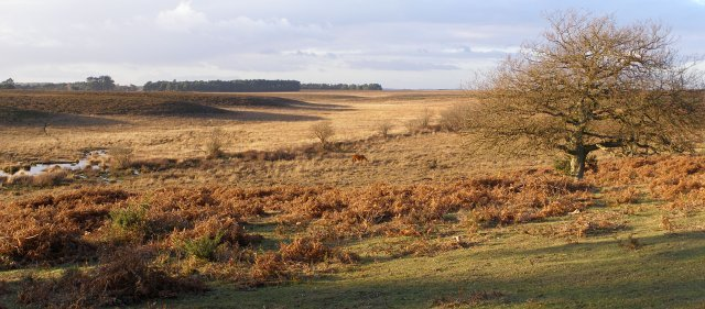 Valley mire west of Ferny Crofts, New Forest
