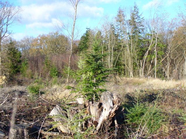 New from Old, Frillinghurst Wood