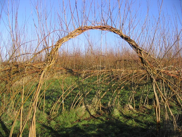 Entrance to a willow maze