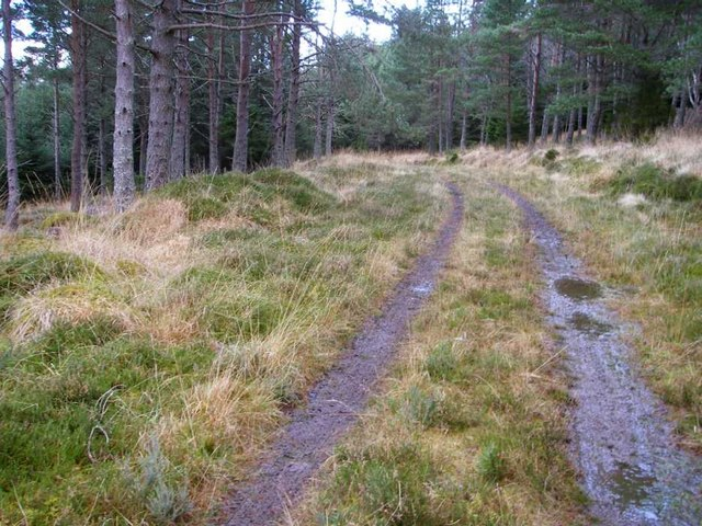 Track through Scots pine plantation