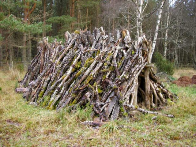 Old pile of firewood