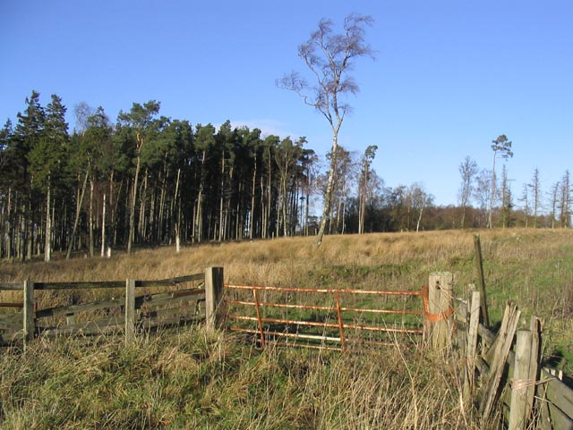 Gateway to a mixed woodland