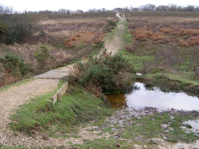 Murray's Passage, Withybed Bottom, New Forest