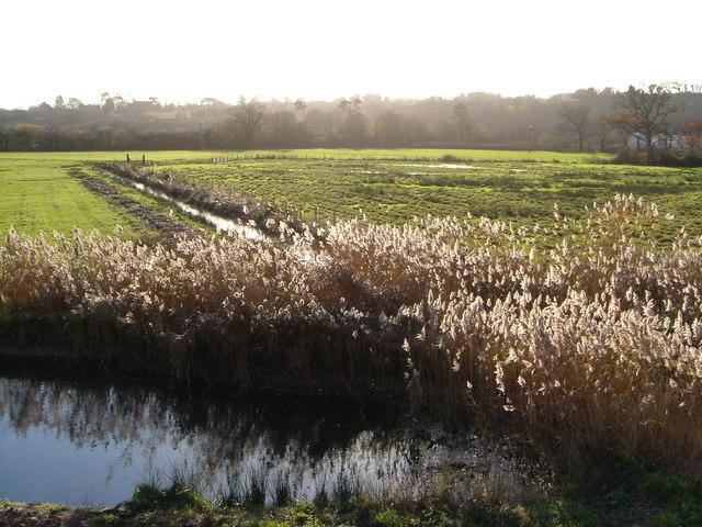 Reeds by Alphin Brook