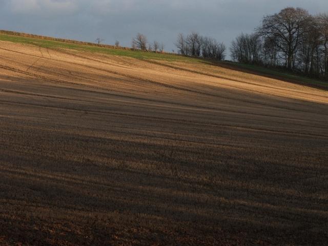 Stubble Field.