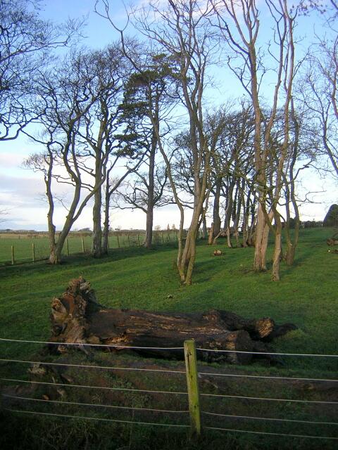Wood at Laigh Langside