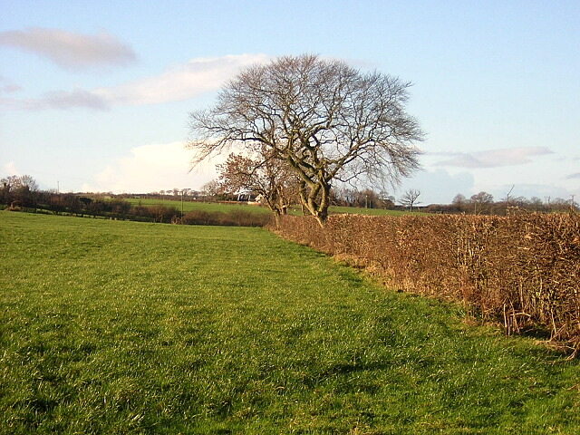 Hedge and Trees Near Treeswoodhead Road