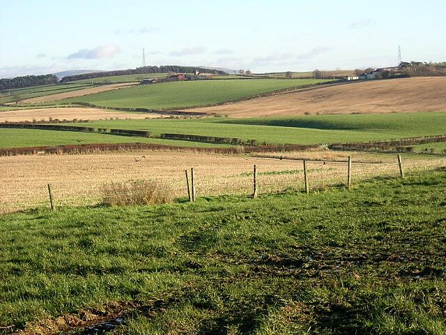 Field Patchwork