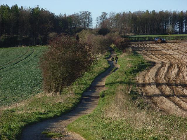 The Ridgeway above Compton Beauchamp