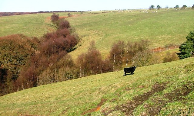 Pasture, First Rigg