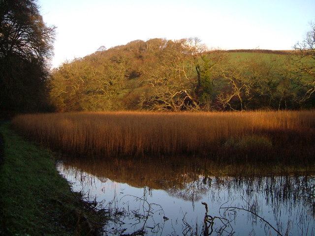Reedbed and marsh, below Holbeton