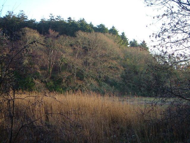 Claypark Plantation