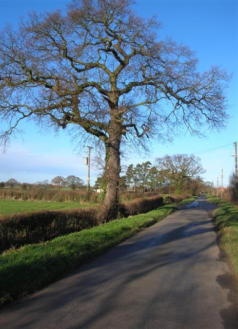 Hagg Lane