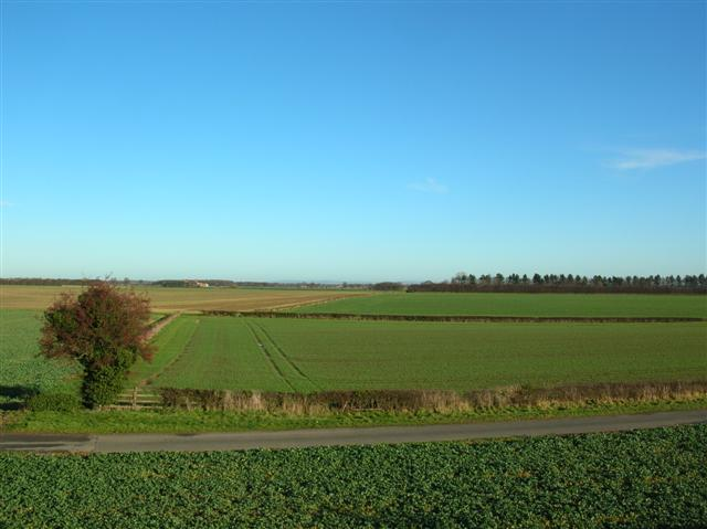 Fields along Colton Lane