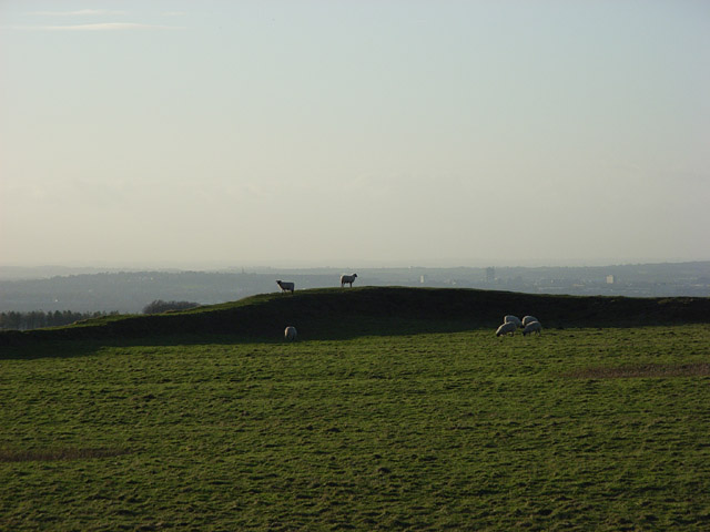 Sheep on Uffington Castle