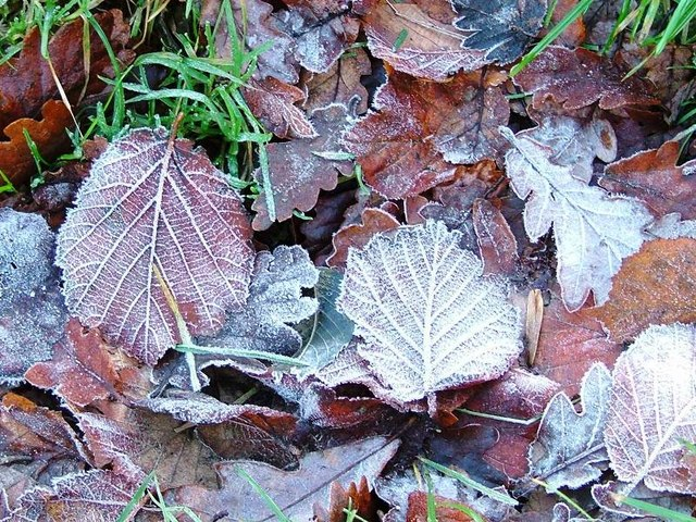 Leaf Litter on Track From Dove Dale