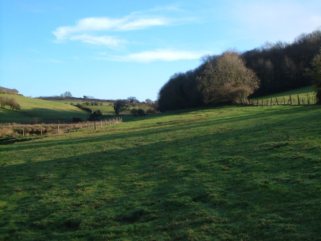 Coldharbour Wood