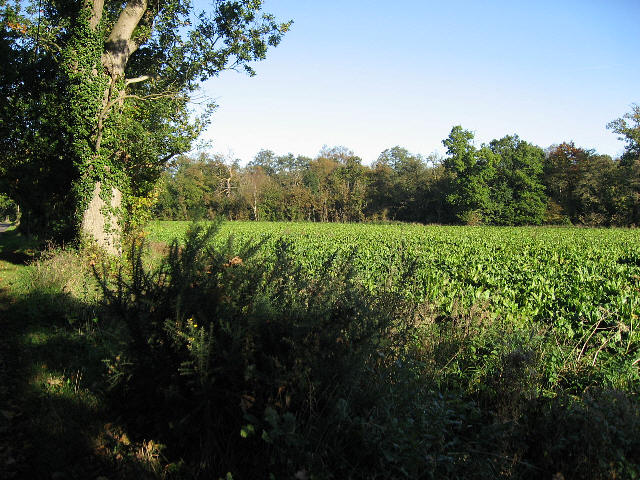 A Field And A Wood