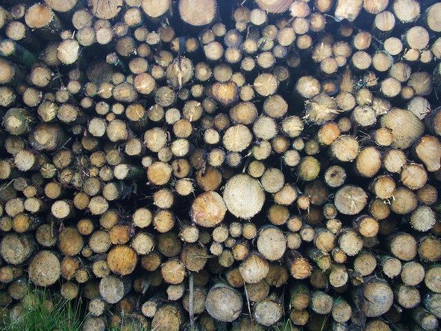 Burnt Hill Logging