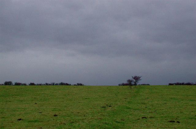 Hodgson's Fields