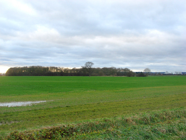 Copse and farmland viewed from Spring Well House