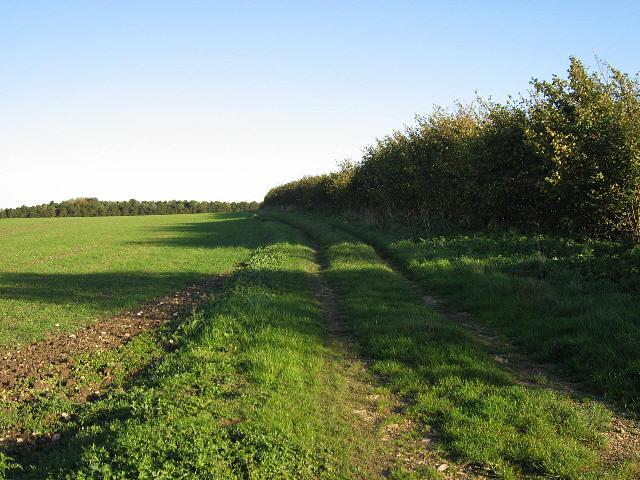 A Fieldside Track
