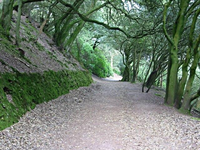 Coast Path through Mount Edgcumbe Woods