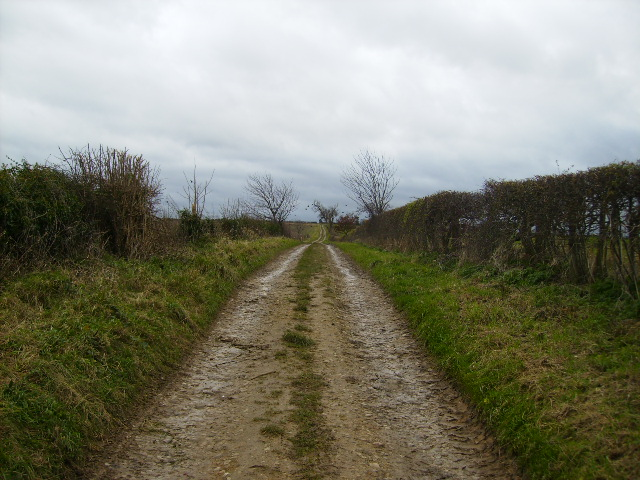 Bridleway leading to Caukleys Bank from Nunnington