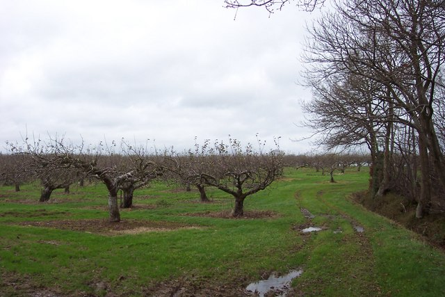 Orchard and woodland
