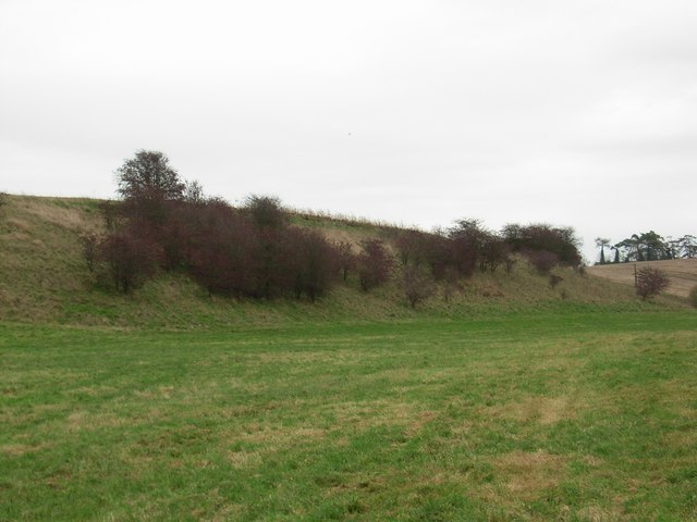 Hawthorns on a hillock
