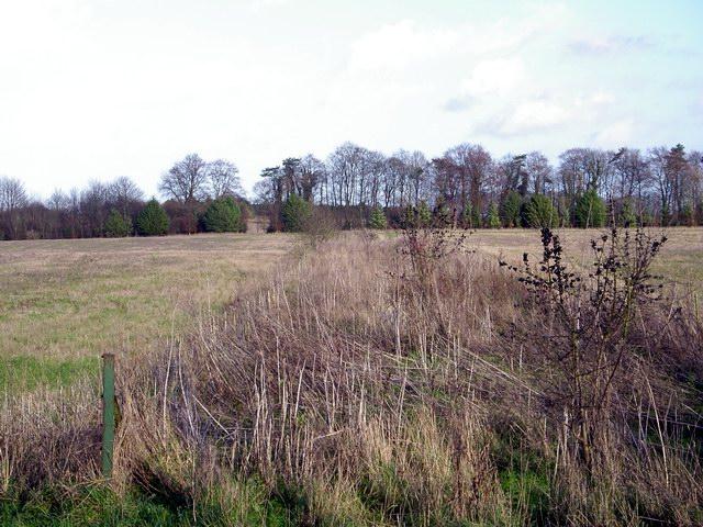 Field boundary/track north of Sutton Down Farm