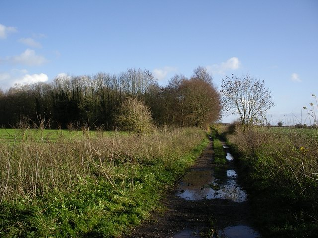 Track heading to the western side of Crawley Down wood